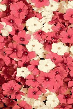 """""""Blume"""" Aquarella Galyx Kollektion Hunnu Brand"""