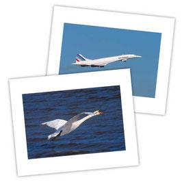 Le bel oiseau blanc
