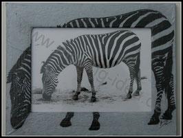 Afrika Serie: Zebra