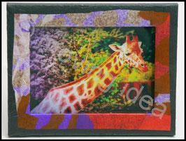 Afrika Serie: Giraffe mit buntem Rahmen