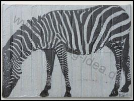 Afrika Serie: Zebra auf Holraster