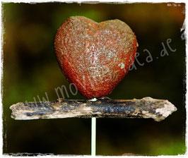 Gartenstecker mit kleinem rostigen Herz