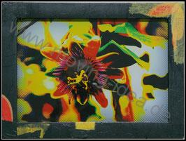 Natur Serie: Passionsblüte mit schwarzem Blütenrahmen