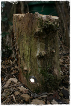 Baumstamm-Boden-Beleuchtung II
