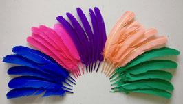 2647.1 Plumes d'indien (couleurs mélangée)