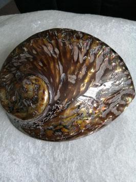 Schitterende Abaloneschelp (2)