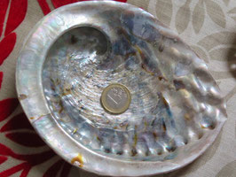 Abaloneschelpen