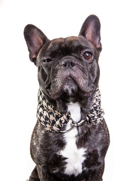 "DoggyScarf ""Caniclassico"""