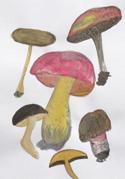 Mushrooms / one