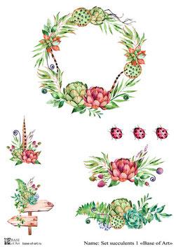 Set succulents 1