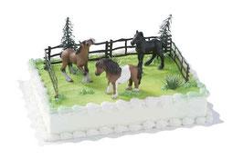 Amerikatorte Pferde