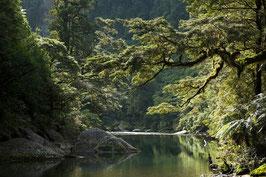 Grüne Flusslandschaft