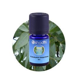 Eukalyptus staigeriana BIO - 5 ml