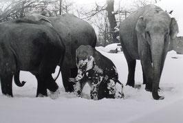 Tierpark Hagenbeck - Hamburg