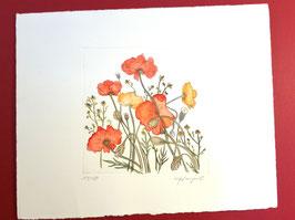 """Original colorierte Radierung """"Mohnblumenwiese"""""""