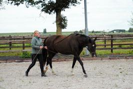 Long reins