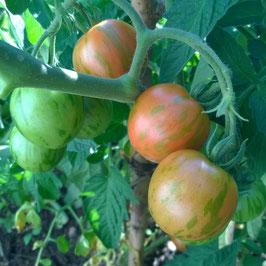 Tomate: Tigerella