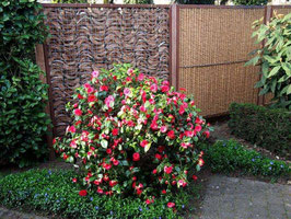 Nieuw in ons assortiment - Kokohusk tuinscherm met Corten stalen omlijsting.