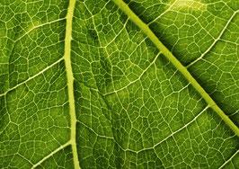 Leaf# 1