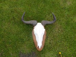 Streifenguru