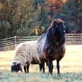 1/2 Bio-Lamm (auf Anfrage)