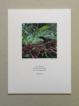 Tableau-haïku - Salamandre noire