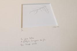 Jeune hêtre - tableaux risoux