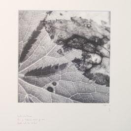 Feuille d'automne - Tableau Risoux