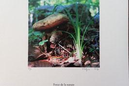 Tableau-haïku - Force de la nature