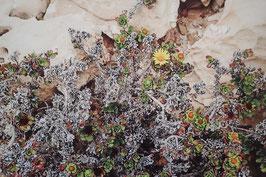 Tableau-haïku - La fleur du buisson
