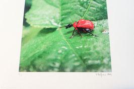 Tableau-haïku - Légère pluie d'été