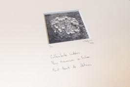Lichen du collembole - tableaux risoux