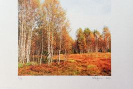 Tableau-haïku - Teintes fauves de l'automne