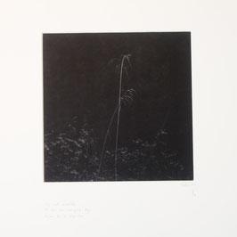 Herbes de la clairière - tableaux risoux