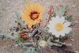 Tableau-haïku - Cette fleur ce jour-là