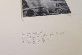 Escargot - tableaux risoux