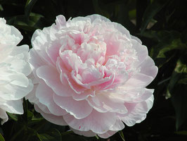 Serene Pastel