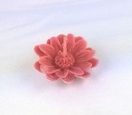 marguerite flottante rose