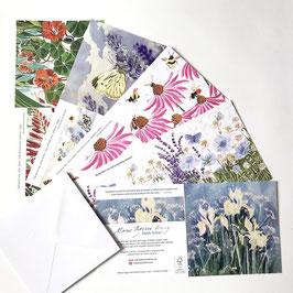 Echinacea Art Card Multipack