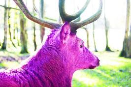 Hirsch Pink