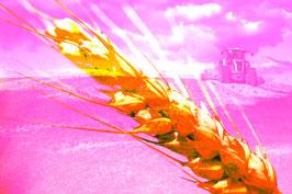 Trecker Pink