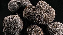 Env. 200 grammes de truffe Uncinatum de plus de 50gr/pc.