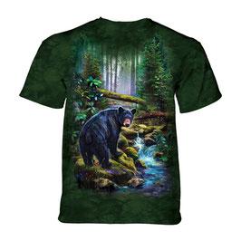 Black Bear Forrest