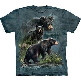 3 Black Bears