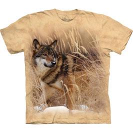 Wolf im Feld