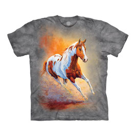 Pferd Sunset Galopp