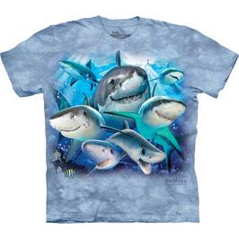 Haifische Selfies