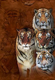 Tigers Orange Evolution
