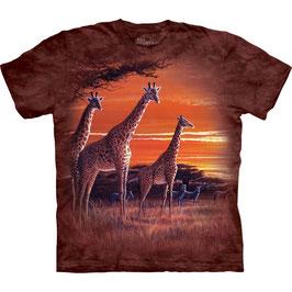 Giraffe Africa