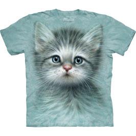 Büsi Blue Eye Kitten